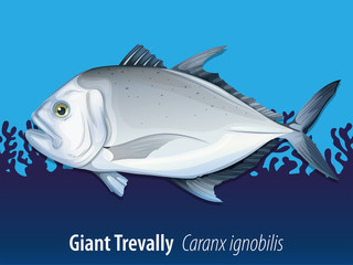 Giant Trevally under the sea