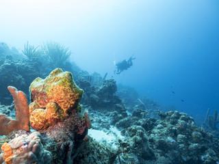Unterwasser - Riff - Schwamm - Taucher - Tauchen - Curacao - Karibik