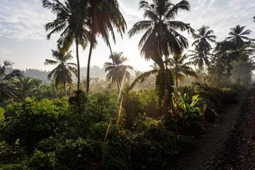 Palm trees, beach.