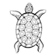 Turtle animal graphic black white isolated illustration vector