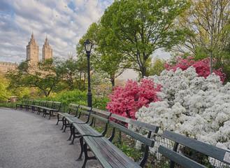 Central Park, New York City Azaleas