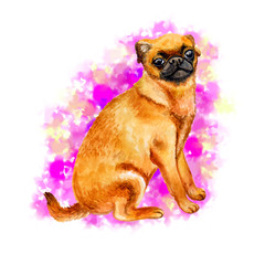 Watercolor closeup portrait of cute Petit Brabancon breed dog isolated on white background. Shorthair small brown dog posing at dog show. Hand drawn sweet home pet. Greeting card design. Clip art