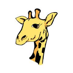 The head of a giraffe 5