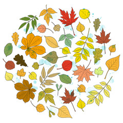 Creative autumn round design: multicolored leaves of various trees and rain drops. Linden, ash, oak, maple, chestnut, birch, elm, willow, aspen, rowan. Vector illustration on white background.