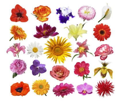 Collage of different bright multi-colored flowers on a white background isolated