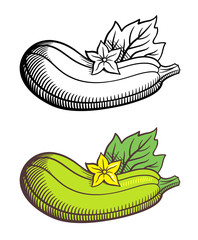 Stylized image of zucchini with leaf and flower. Vector, isolated on white. Outline and colored version
