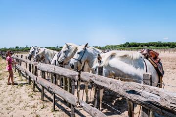 Fillette et chevaux blancs camarguais
