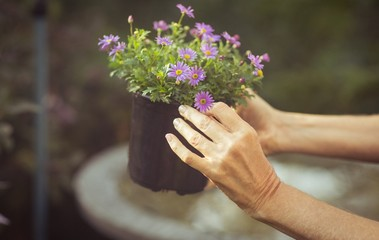 Cropped image of gardener holding potted flowers