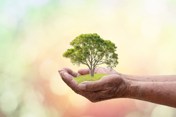 We love the world of ideas, man planted a tree in the hands.Blur the background of sky and grass