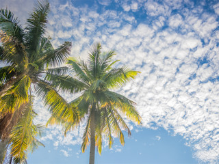 Tropical sky with coconut tree