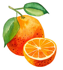 Watercolor painting of single orange with one half