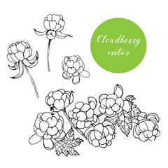 Hand drawn Cloudberries set