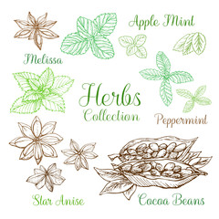 Illustration of herbs collection. Freehand drawing sketch. It can be used for design menu, greeting cards