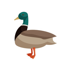 Duck icon in cartoon style isolated on white background. Animals symbol
