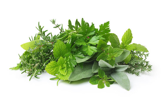Fresh spices and herbs isolated