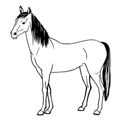 Vector illustration of a horse painted by hand