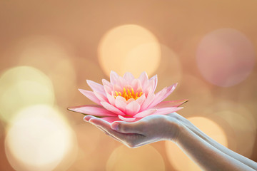 Wall Murals Lotus flower Vesak day, Buddhist lent day, Buddha's birthday worshipping concept with woman's hands holding water Lilly or lotus flower