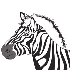 zebra icon. Animal and art design. Vector graphic