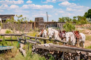 Le Camargue, les chevaux blancs camarguais au bord de l'étang