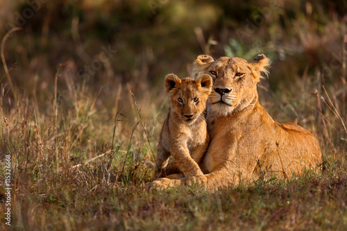 Wall mural Lion mother of Notches Rongai Pride with cub in Masai Mara, Kenya