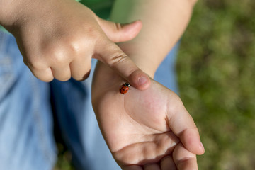 Young child fascinated by a ladybug