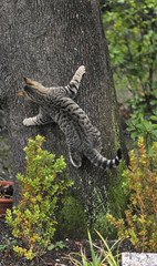 playful cat climbing on the tree