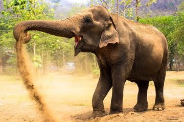 Elephant Dirt Bath 2