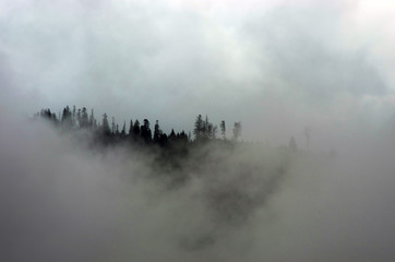 Poster Morning with fog Amazing mountain landscape with dense fog. Carpathian Mountains