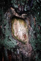 background tree bark