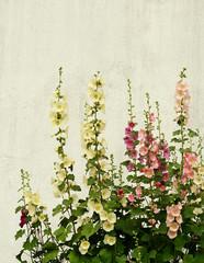 Mallow flowers