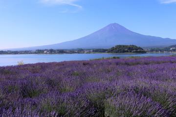 河口湖大石公園から見た富士山