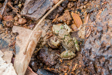 Litle Frog on ground