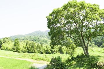 大きな木のある風景