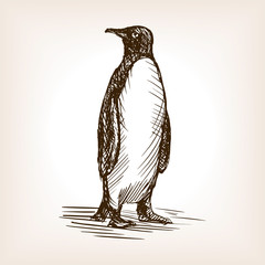 Penguin sketch vector illustration