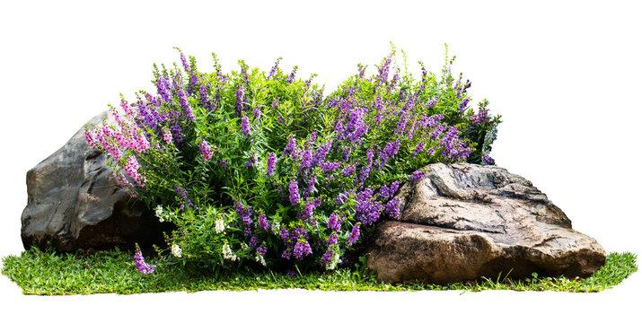 Natural flower and stone in garden isolated on white background. Garden flower