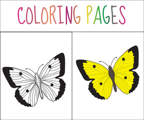 Coloring book page. Butterfly. Sketch and color version. Coloring for kids. Vector illustration