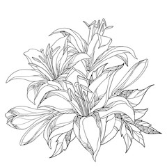 Vector bouquet with ornate white Lily flower, buds and leaves in black isolated on white. Round composition with lilies. Floral elements in contour style for summer design and coloring book.