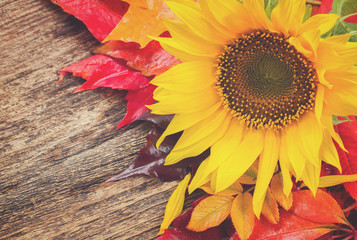 fresh yellow sunflower and fall leaves on wooden background, retro toned