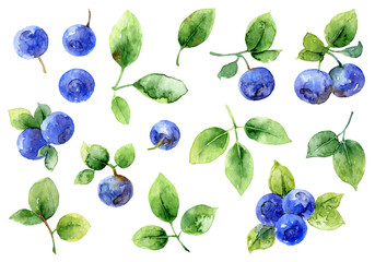 Bilberry on white background