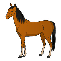 Vector illustration horse