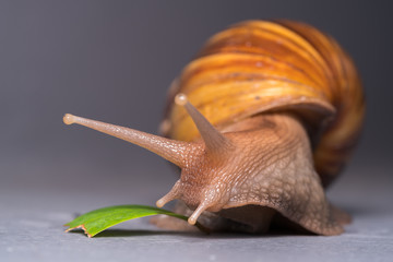 Close up of a snail