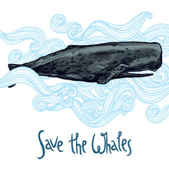Hand Drawn Whale Illustration In Blue Waves. Save The Whales