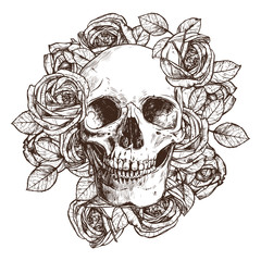 Skull And Roses. Hand Drawn Illustration