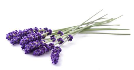 Tuinposter Lavendel Lavender flowers bunch