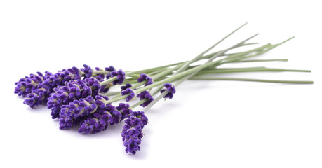 Keuken foto achterwand Lavendel Lavender flowers bunch