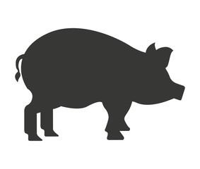 pig farm isolated icon design