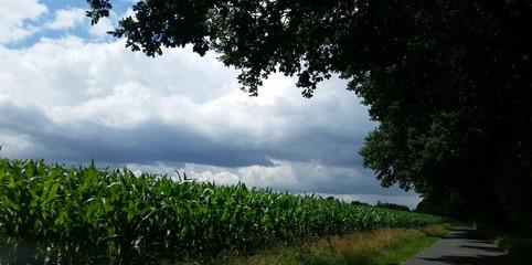 Unwetterstimmung mit schwarzen Wolken mit Maisfeld und Bäumen