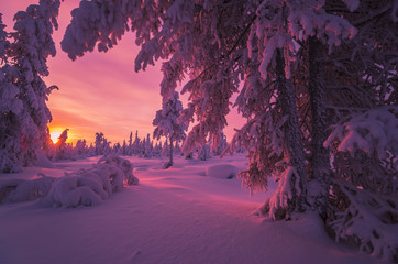 Winter landscape with forest, cloudy sky, sun, sunset and trees