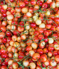 Background from freshly harvested cherry. Close up, top view, high resolution product.