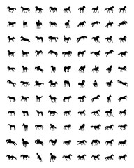 Black silhouettes of horses on the white background, vector